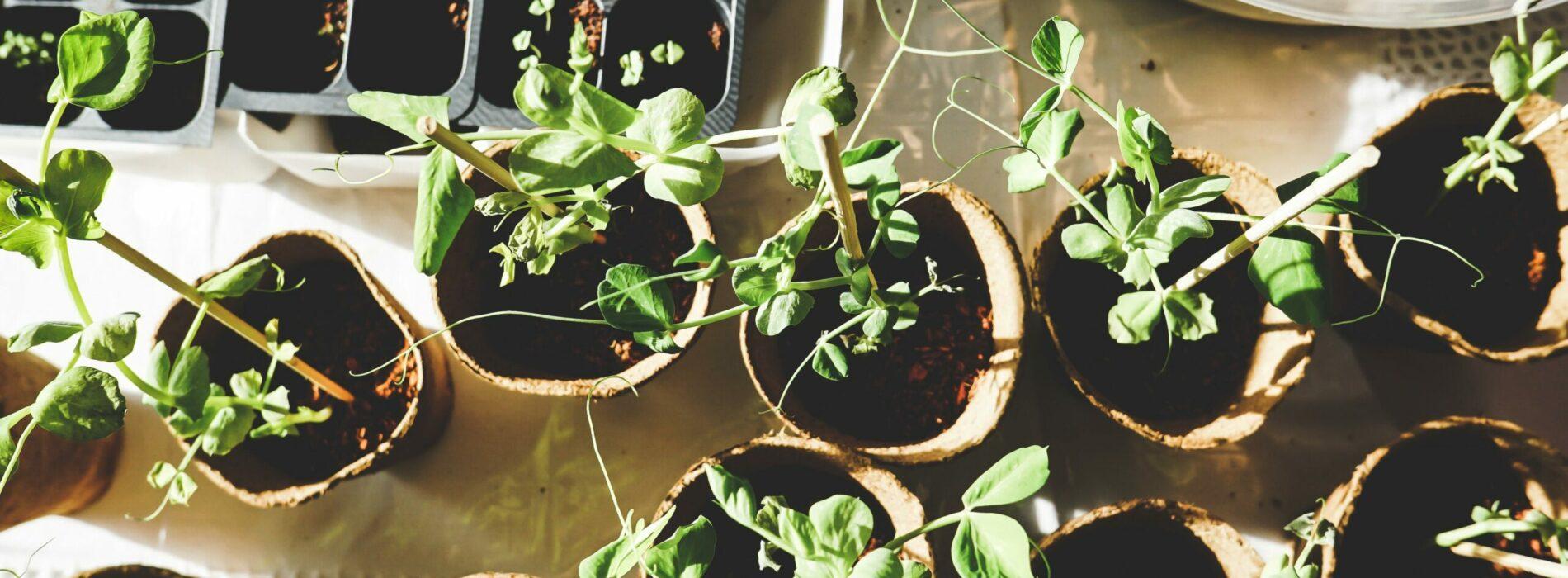 Etapy zakładania ogrodu od podstaw